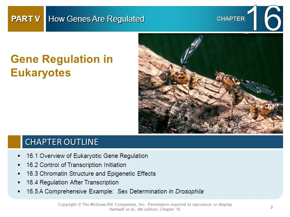 16 Gene Regulation in Eukaryotes CHAPTER OUTLINE PART V
