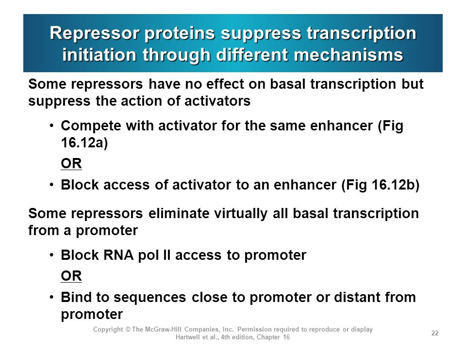 Repressor proteins suppress transcription initiation through different mechanisms