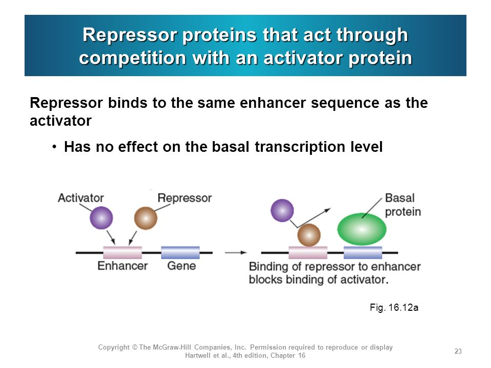 Repressor proteins that act through competition with an activator protein