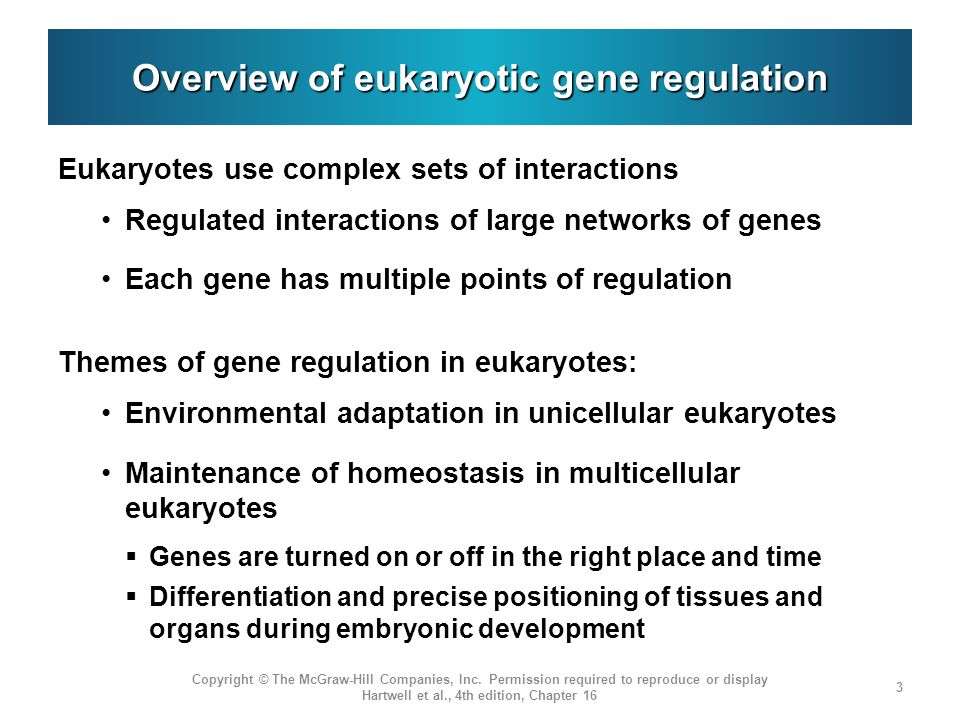 Overview of eukaryotic gene regulation