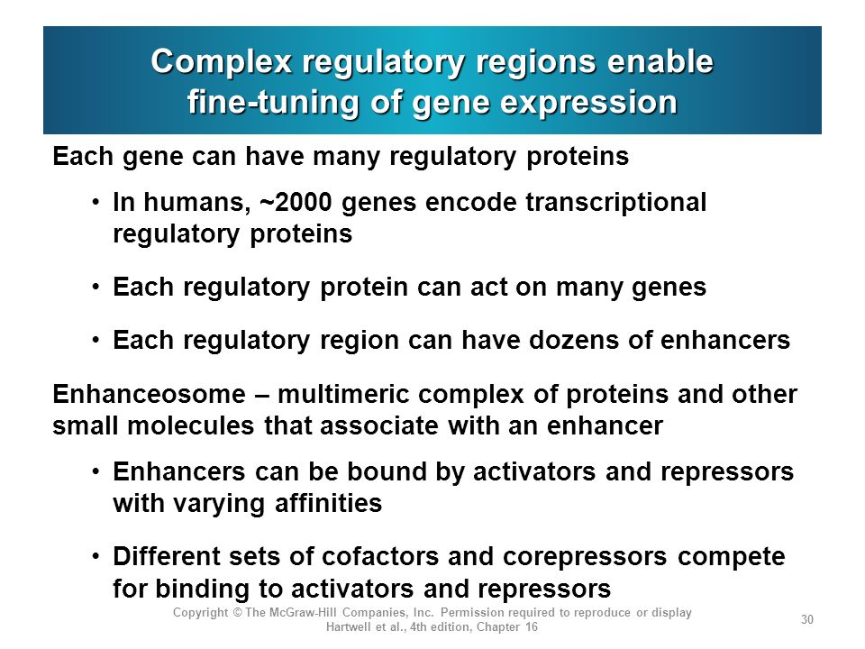 Complex regulatory regions enable fine-tuning of gene expression