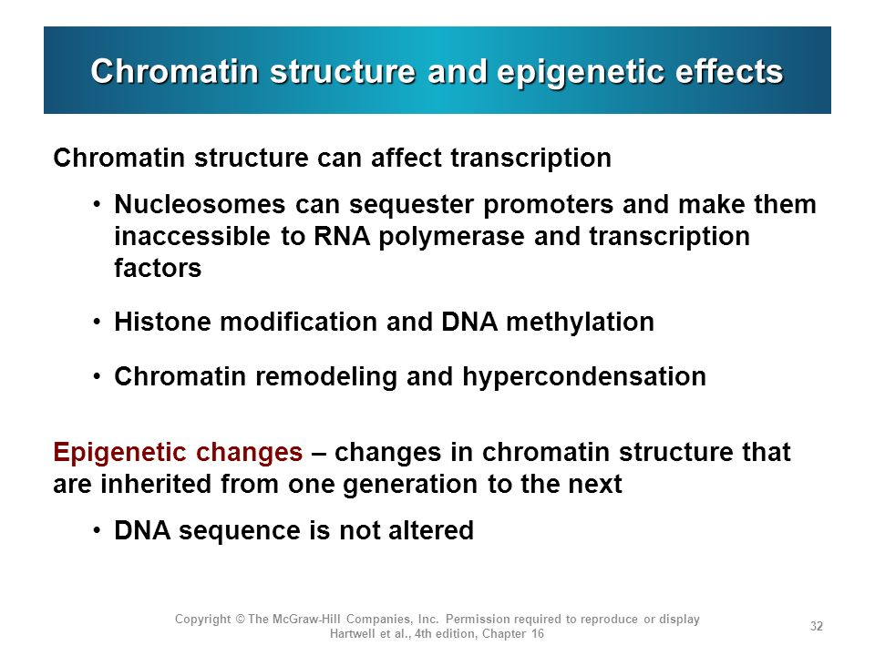 Chromatin structure and epigenetic effects