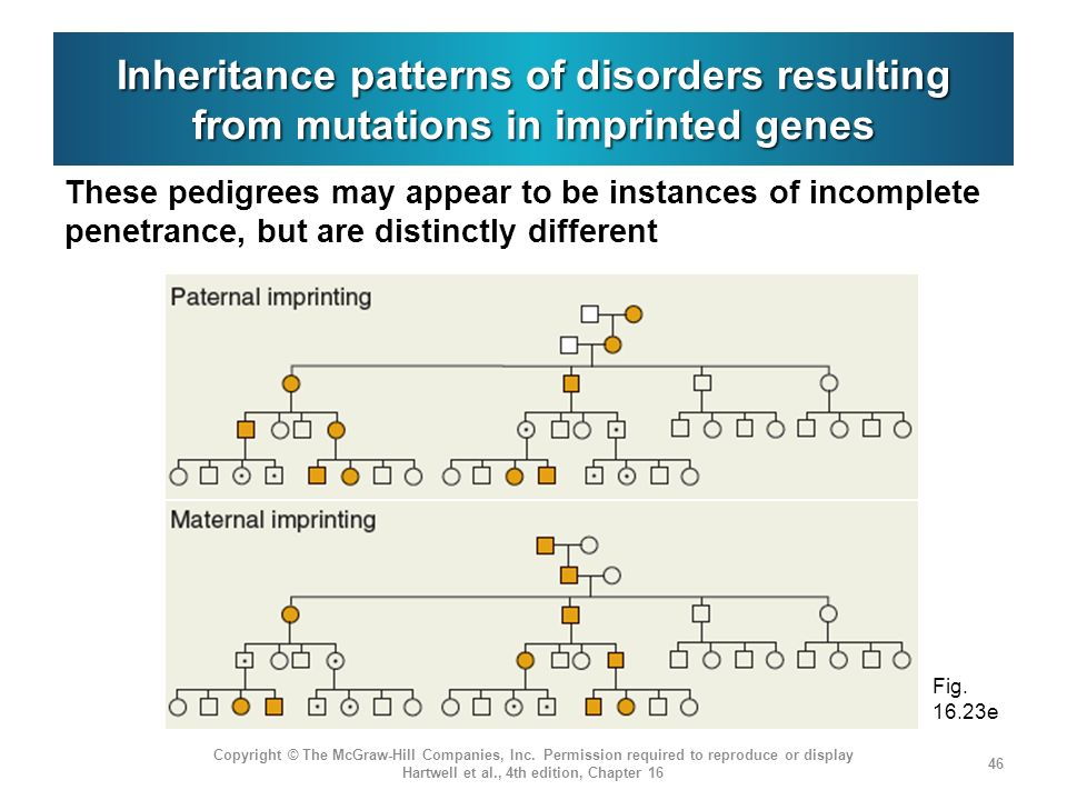 Inheritance patterns of disorders resulting from mutations in imprinted genes