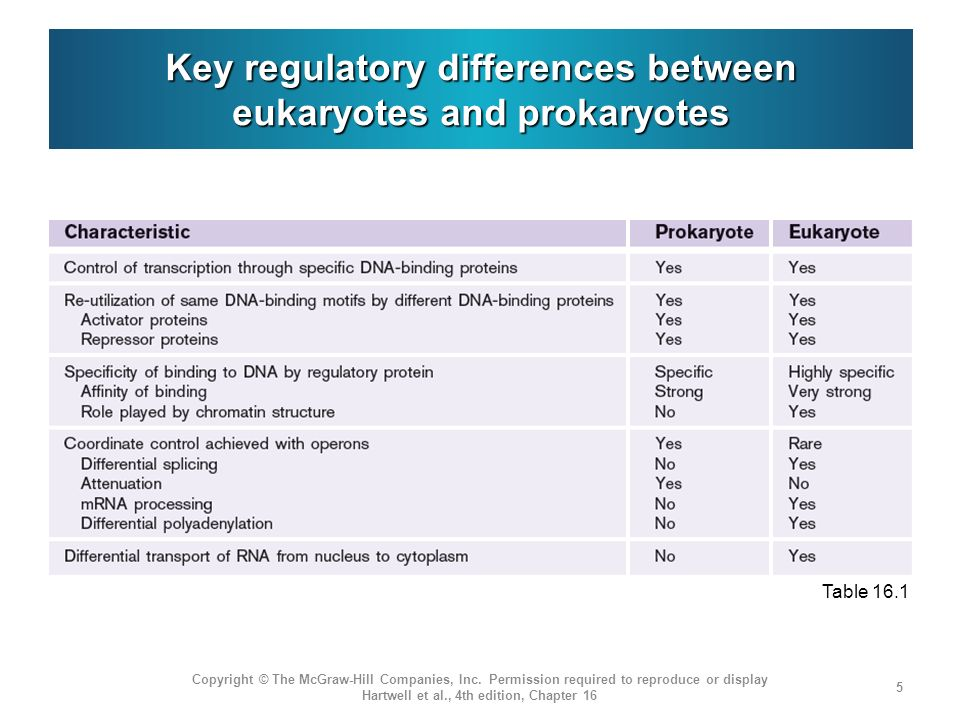 Key regulatory differences between eukaryotes and prokaryotes