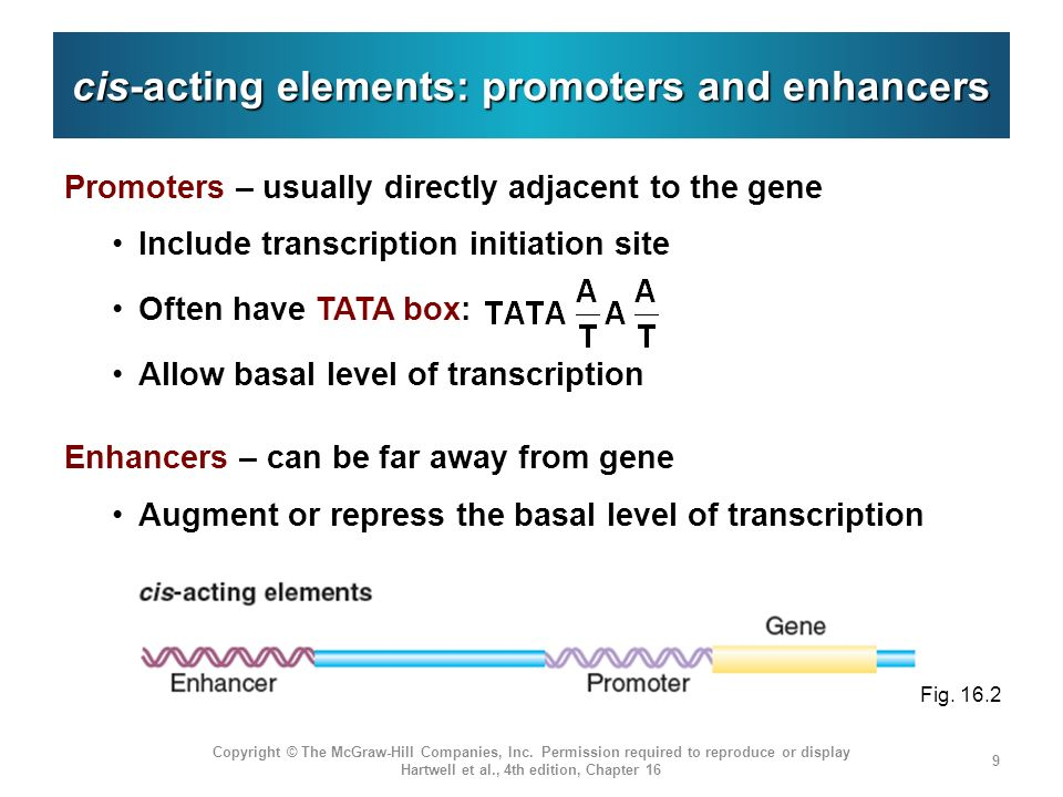 cis-acting elements: promoters and enhancers
