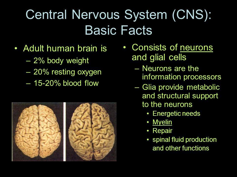 Central Nervous System Cns Basic Facts Ppt Video Online Download