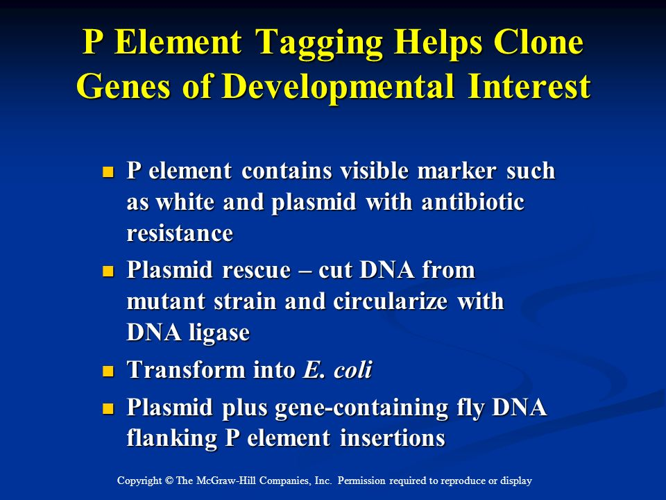 P Element Tagging Helps Clone Genes of Developmental Interest