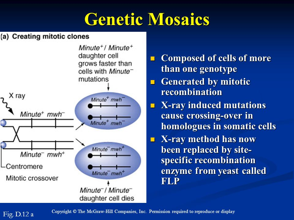 Genetic Mosaics Composed of cells of more than one genotype