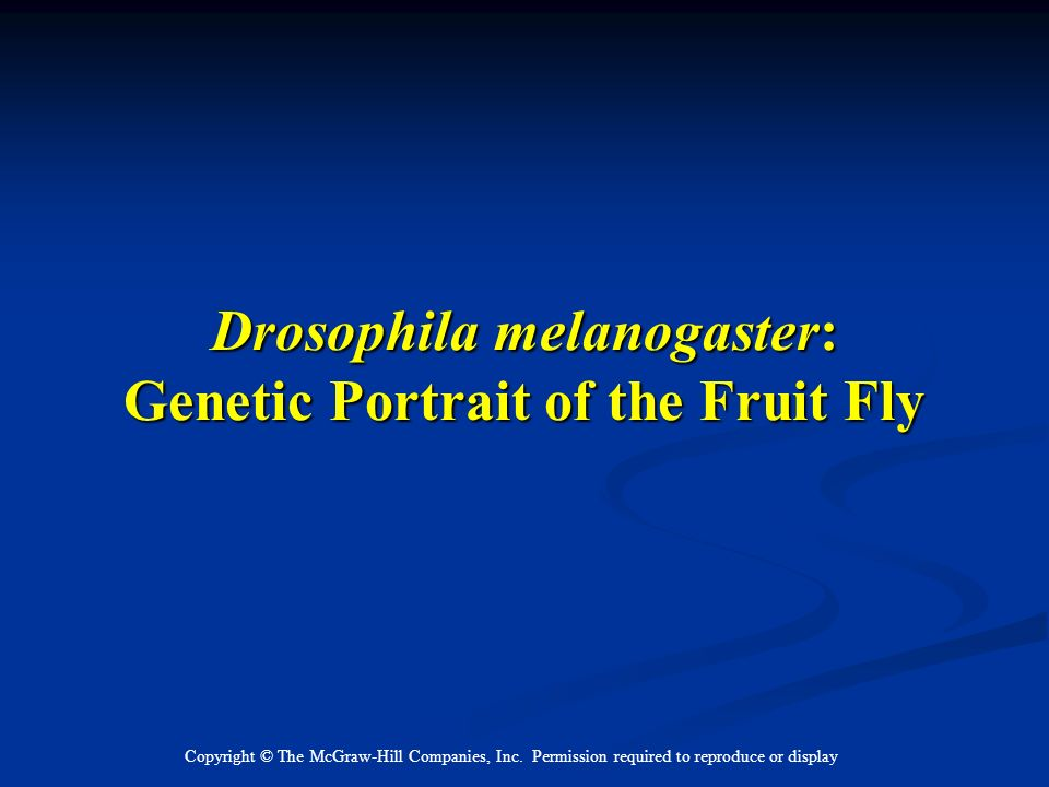Drosophila melanogaster: Genetic Portrait of the Fruit Fly