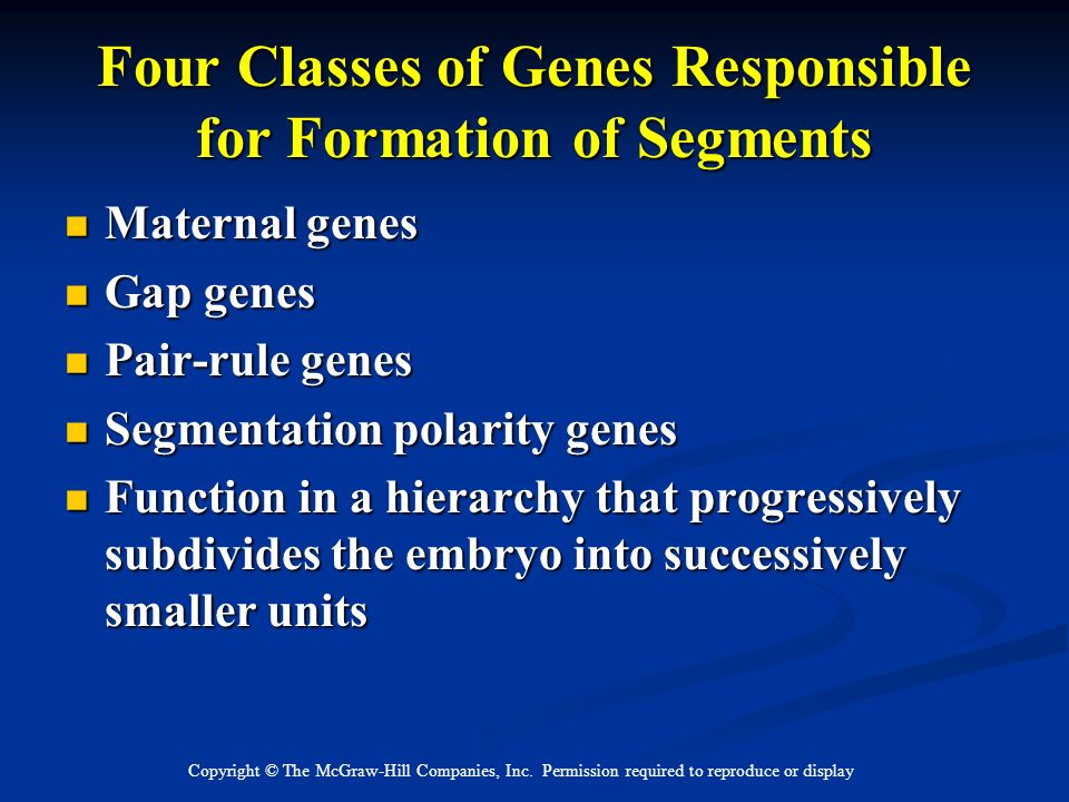 Four Classes of Genes Responsible for Formation of Segments