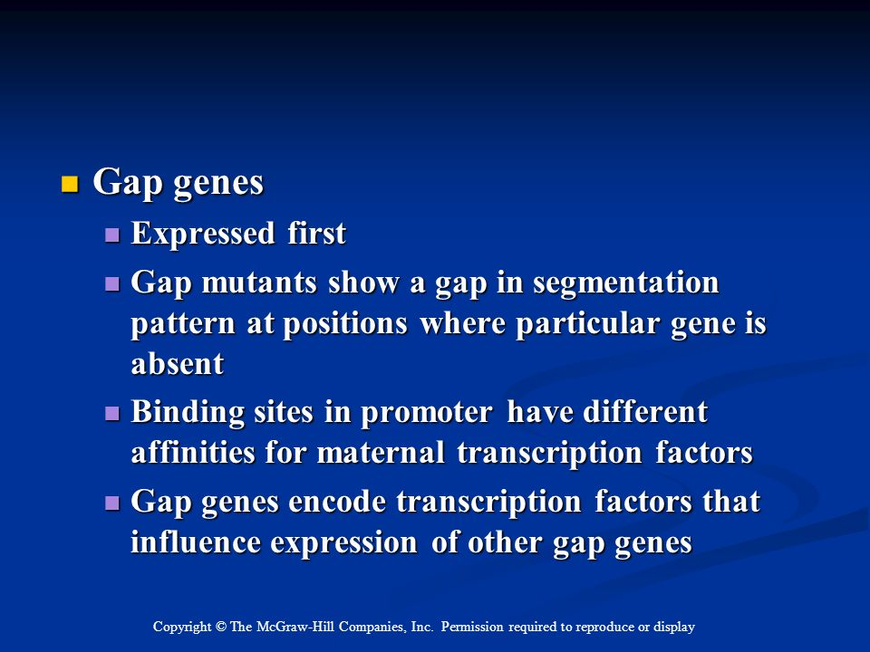 Gap genes Expressed first