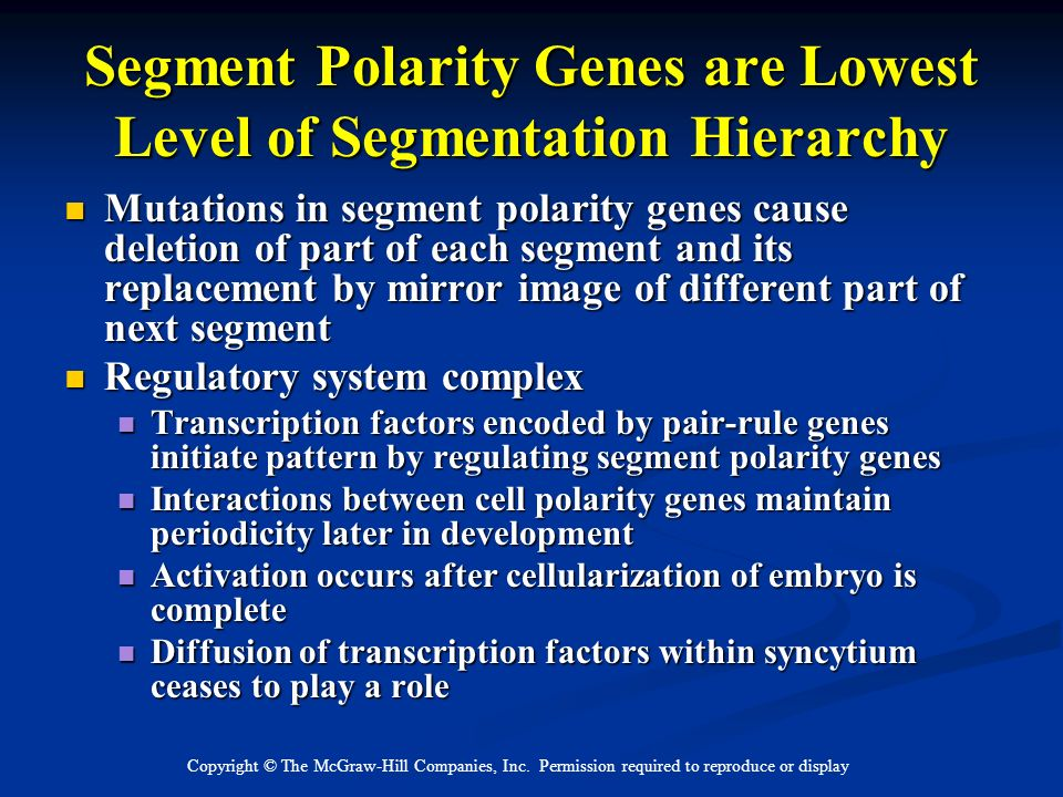 Segment Polarity Genes are Lowest Level of Segmentation Hierarchy