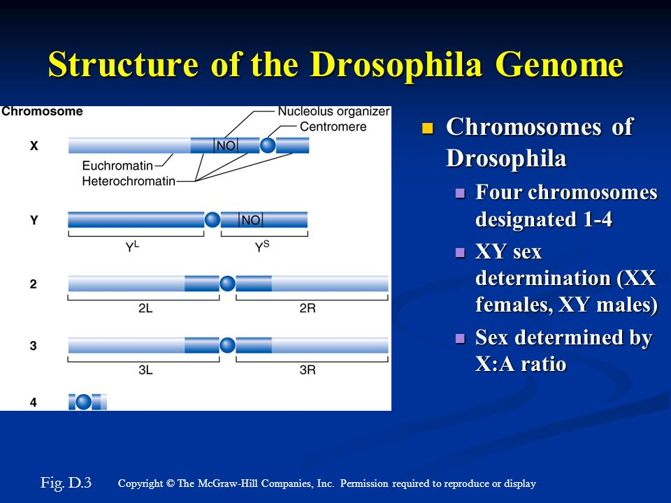 Structure of the Drosophila Genome