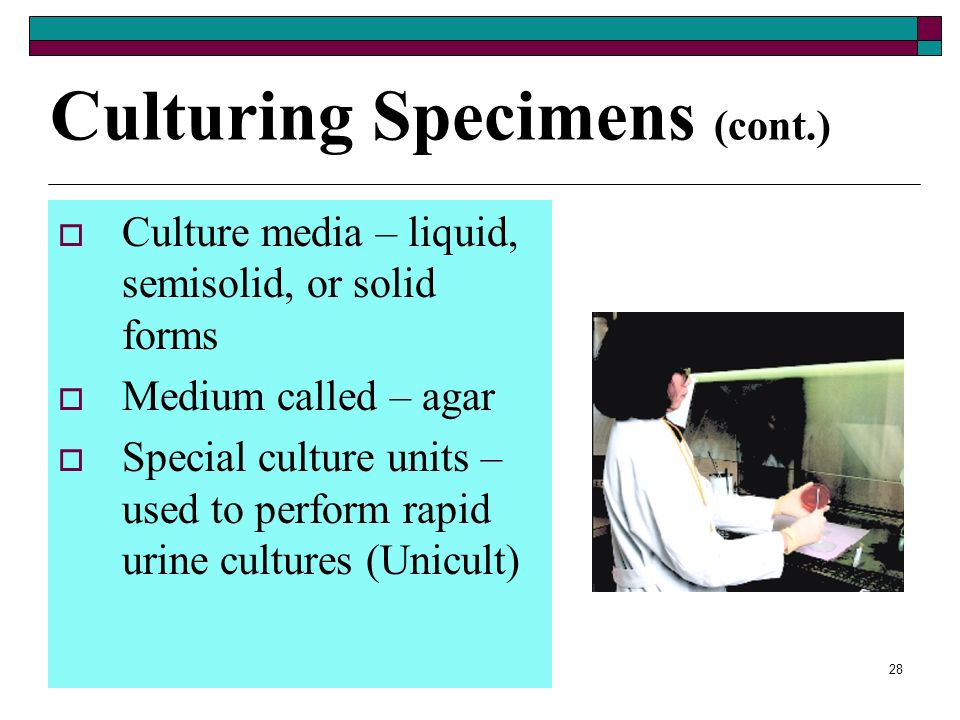 Culturing Specimens (cont.)