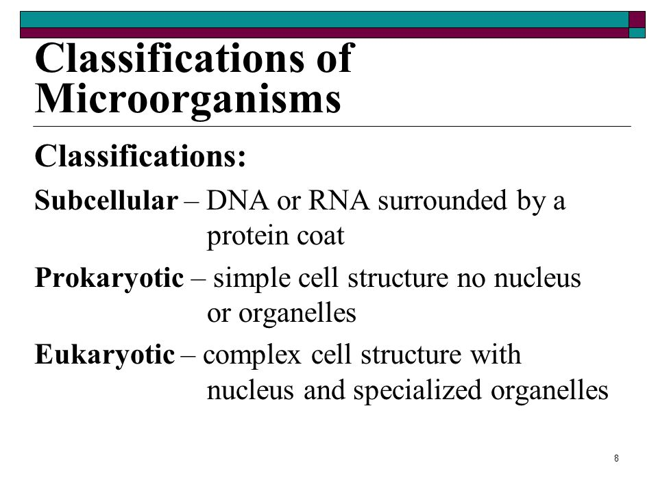 Classifications of Microorganisms