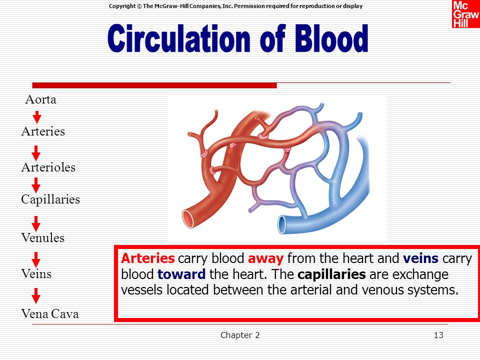 Circulation of Blood Aorta Arteries Arterioles Capillaries Venules