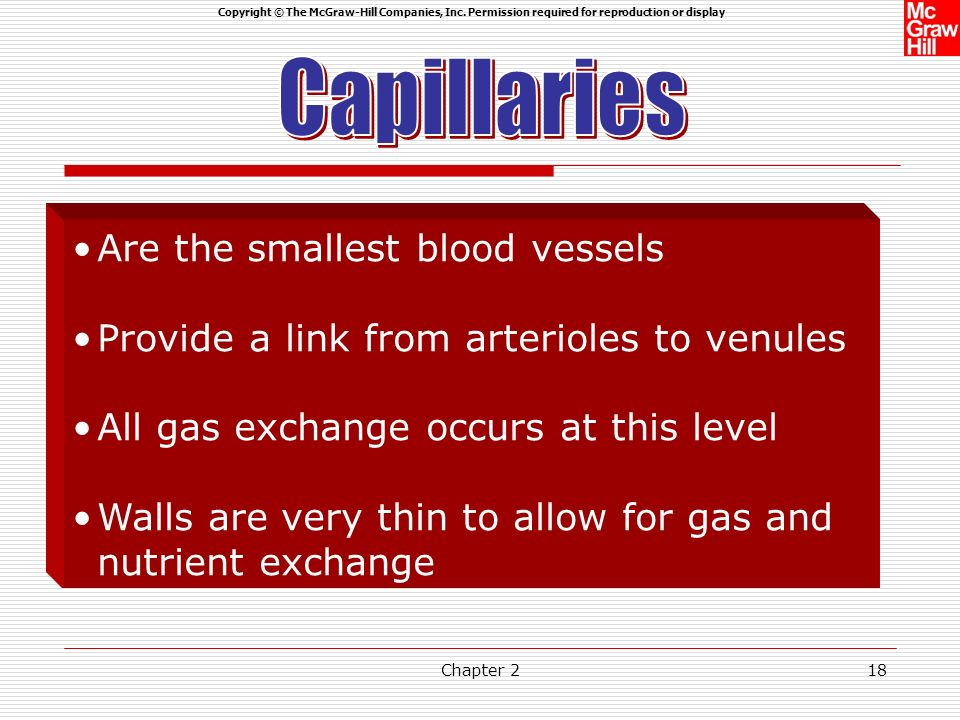 Capillaries Are the smallest blood vessels