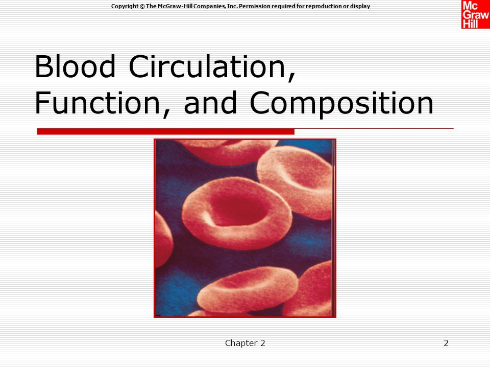 Blood Circulation, Function, and Composition