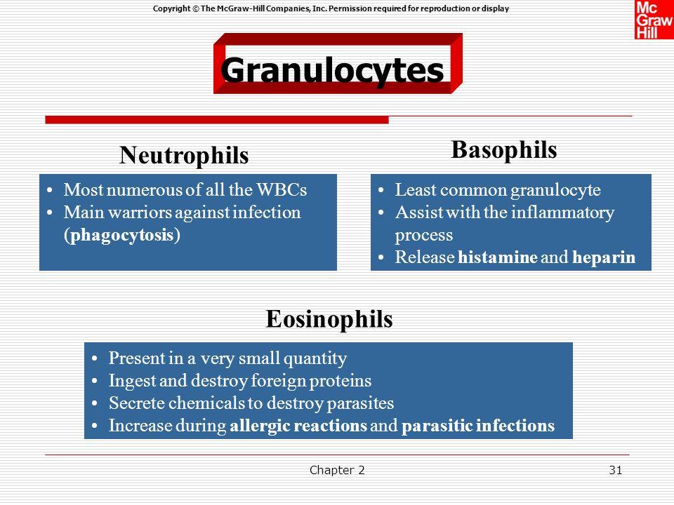 Granulocytes Basophils Neutrophils Eosinophils