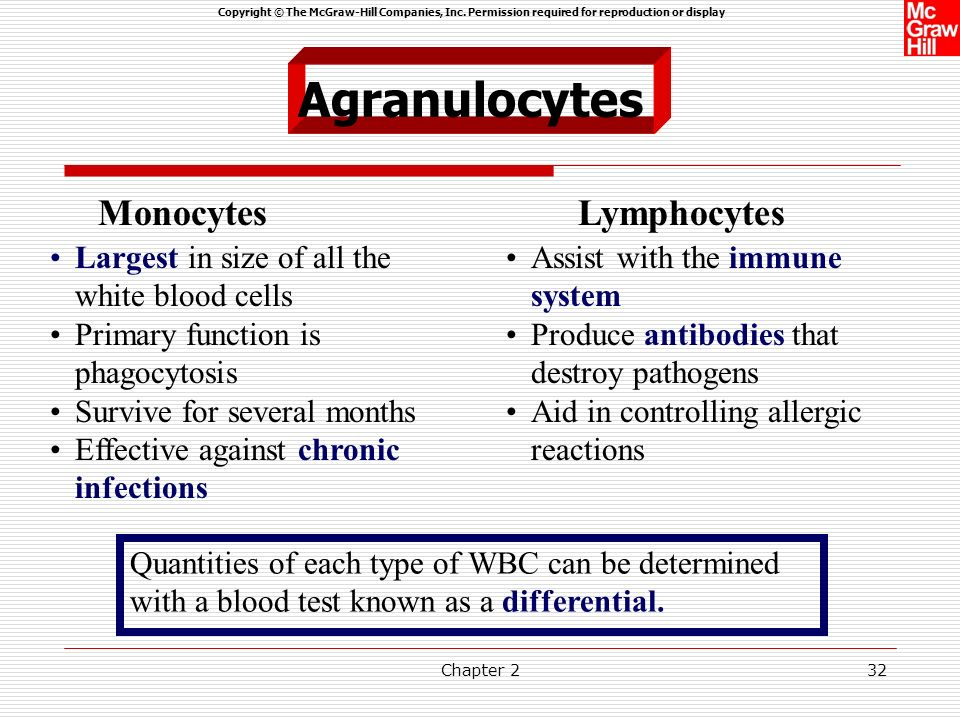 Agranulocytes Monocytes Lymphocytes