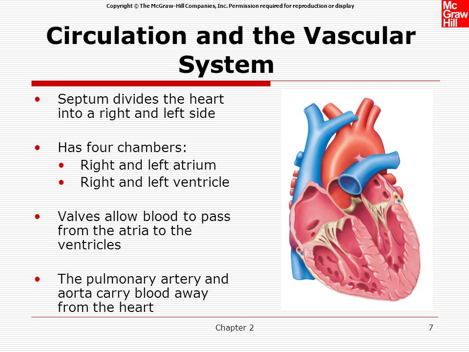 Circulation and the Vascular System