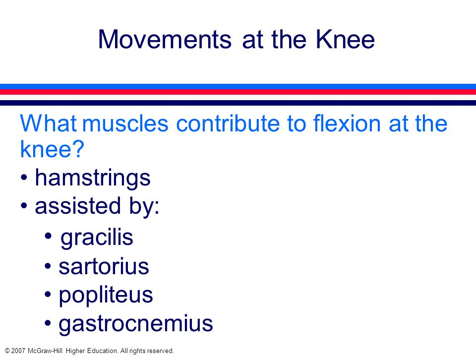 Movements at the Knee gracilis