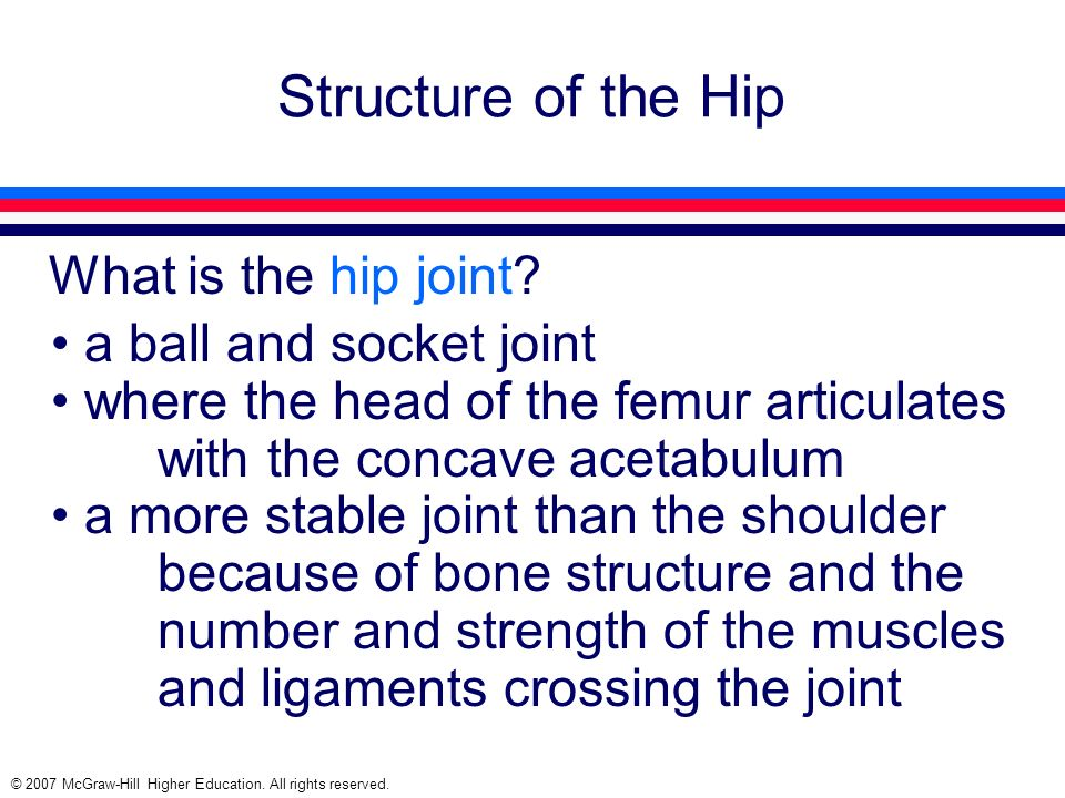 Structure of the Hip What is the hip joint a ball and socket joint