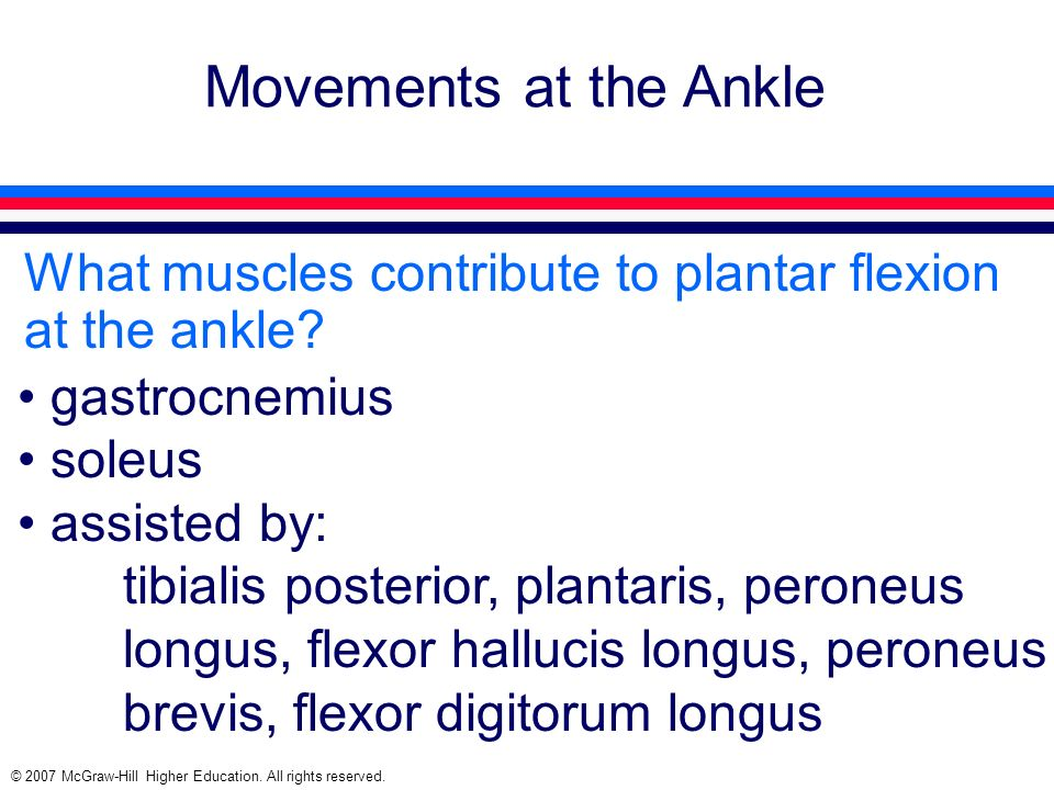 Movements at the Ankle What muscles contribute to plantar flexion at the ankle gastrocnemius. soleus.