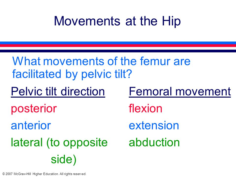 Movements at the Hip What movements of the femur are facilitated by pelvic tilt Pelvic tilt direction Femoral movement.