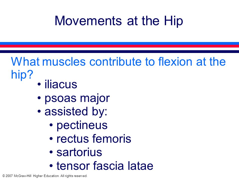 Movements at the Hip What muscles contribute to flexion at the hip