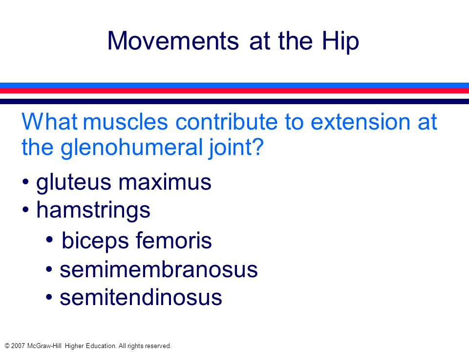 Movements at the Hip biceps femoris