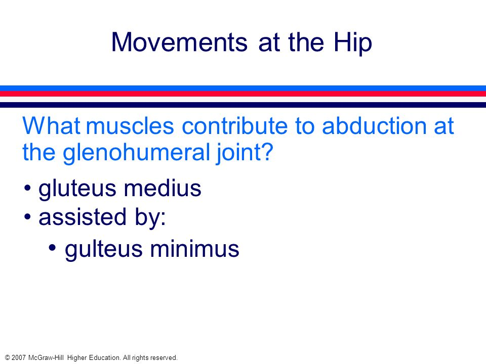 Movements at the Hip gulteus minimus