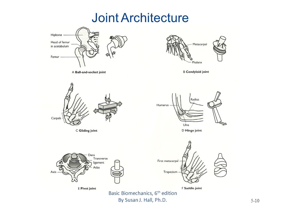 Basic Biomechanics, 6th edition
