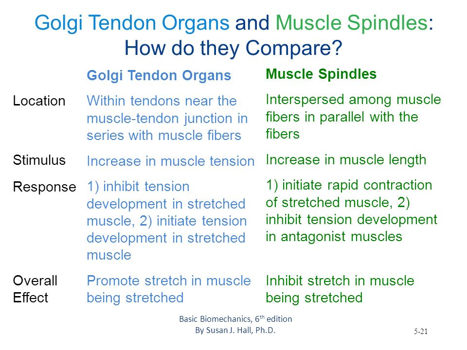 Golgi Tendon Organs and Muscle Spindles: How do they Compare