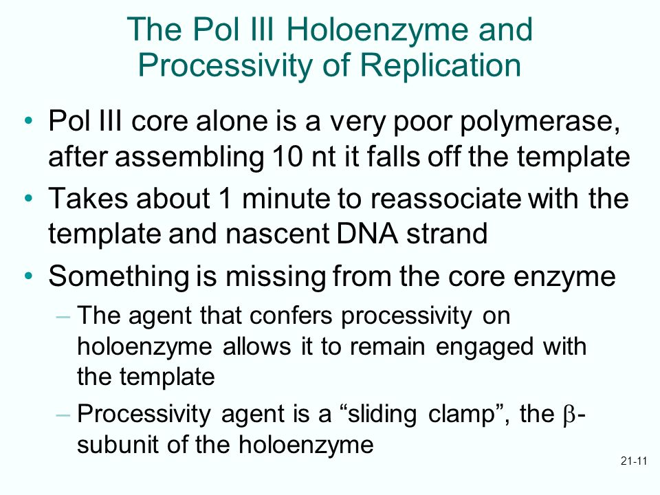 The Pol III Holoenzyme and Processivity of Replication