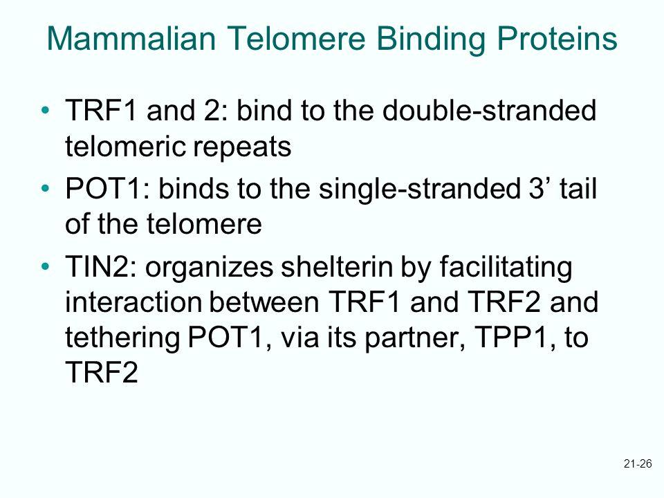 Mammalian Telomere Binding Proteins