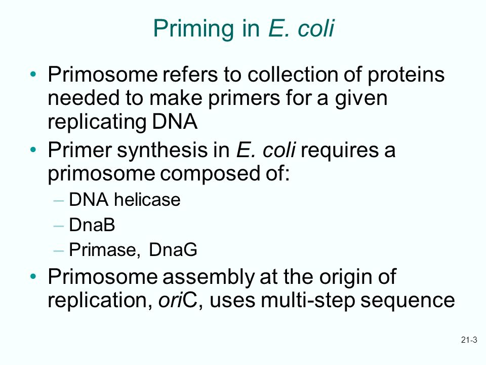Priming in E. coliPrimosome refers to collection of proteins needed to make primers for a given replicating DNA.