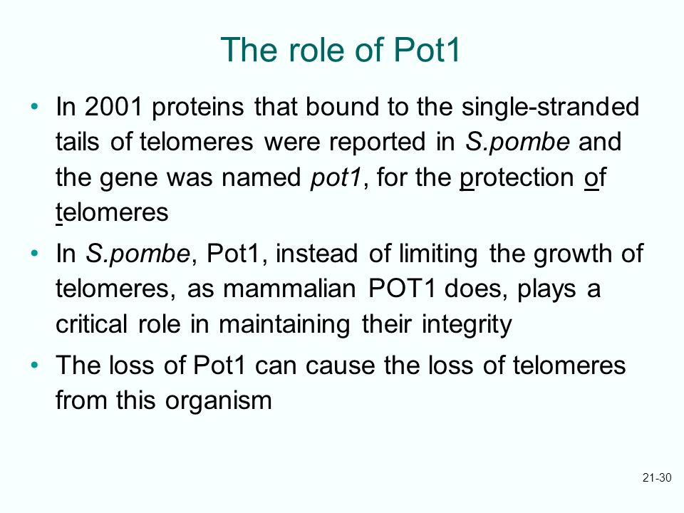 The role of Pot1