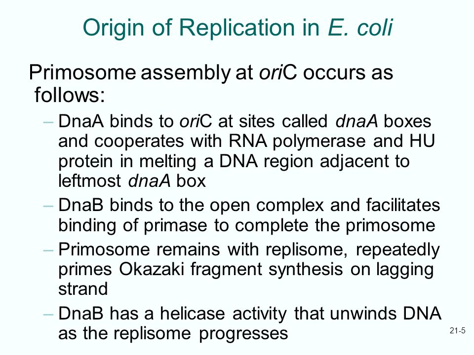 Origin of Replication in E. coli