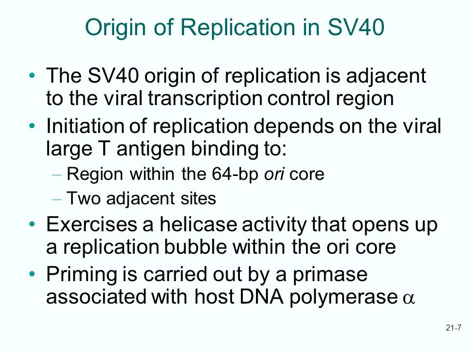 Origin of Replication in SV40