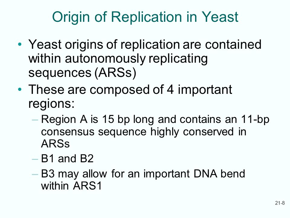 Origin of Replication in Yeast