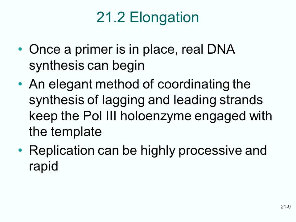 21.2 Elongation Once a primer is in place, real DNA synthesis can begin.