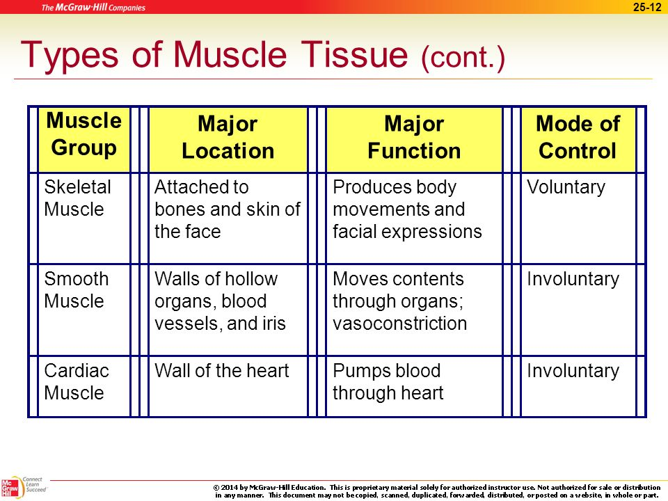 Types of Muscle Tissue (cont.)