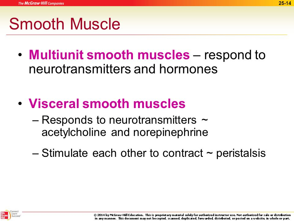 Smooth Muscle Multiunit smooth muscles – respond to neurotransmitters and hormones. Visceral smooth muscles.
