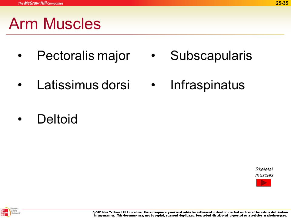 Arm Muscles Pectoralis major Latissimus dorsi Deltoid Subscapularis