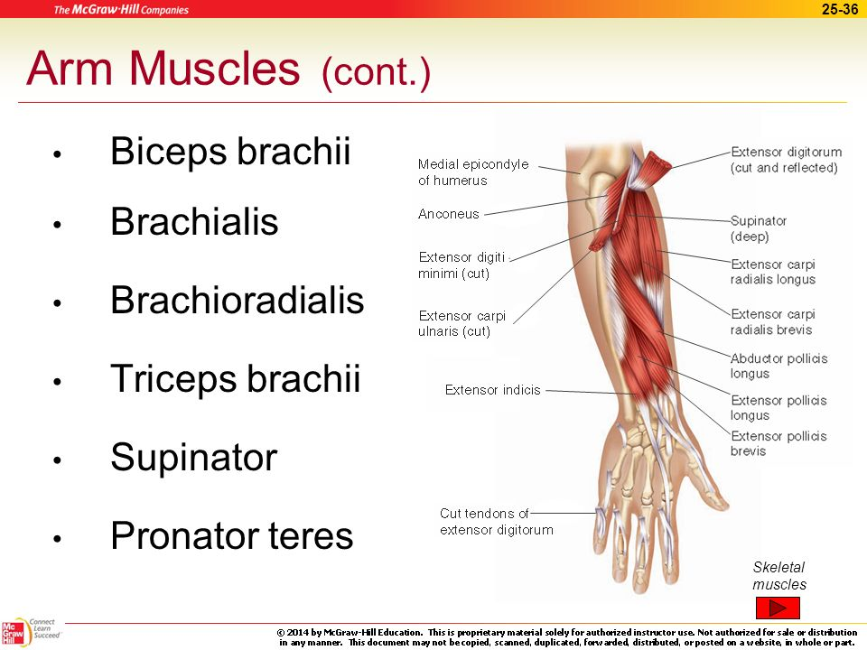 arm muscles essay Free muscle papers, essays, and research papers my account search results free essays good essays for example, to open a book by arm muscle contraction.