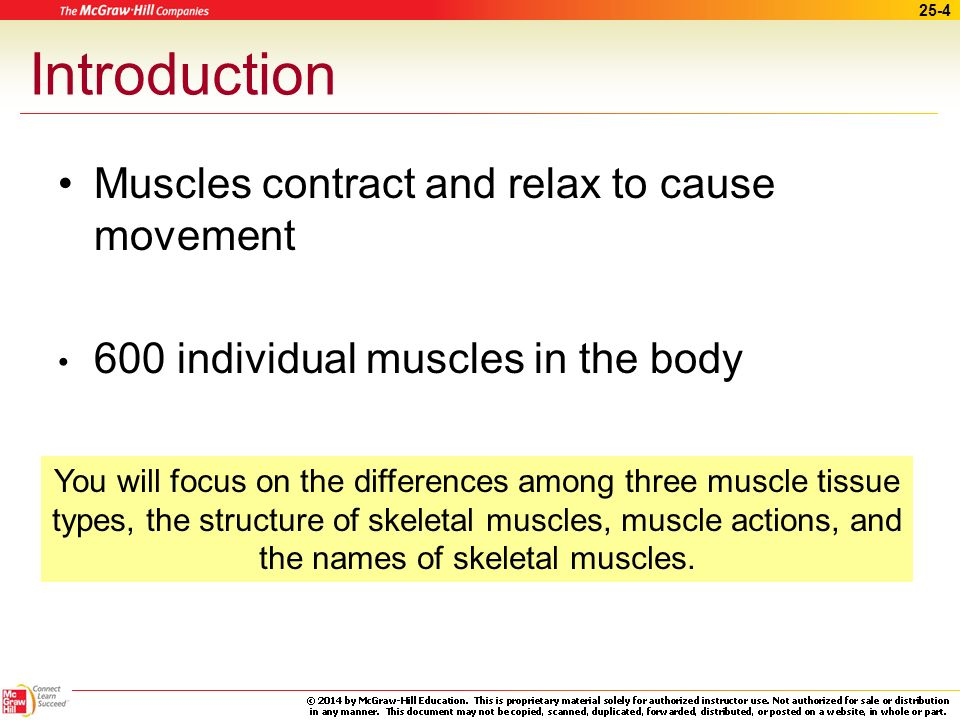Introduction Muscles contract and relax to cause movement