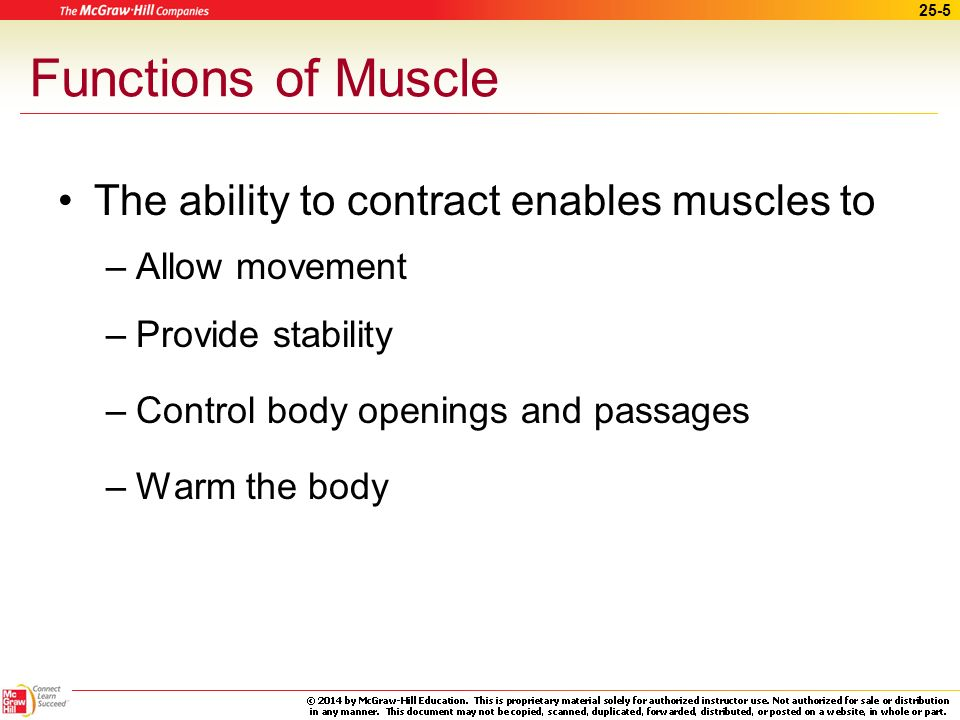 Functions of Muscle The ability to contract enables muscles to