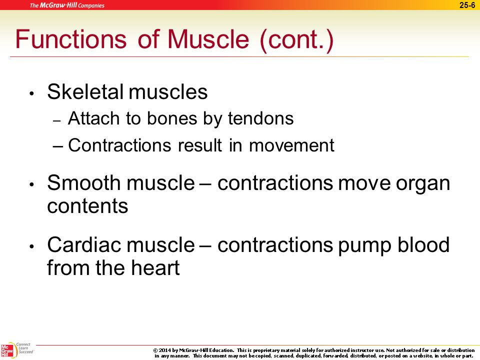 Functions of Muscle (cont.)