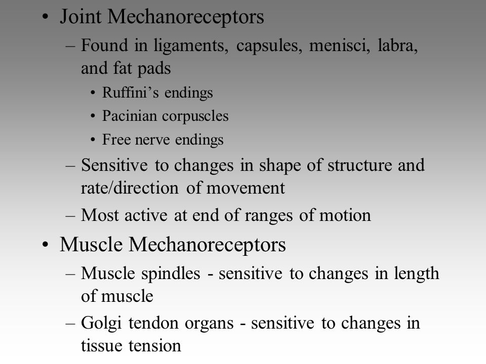 Joint Mechanoreceptors